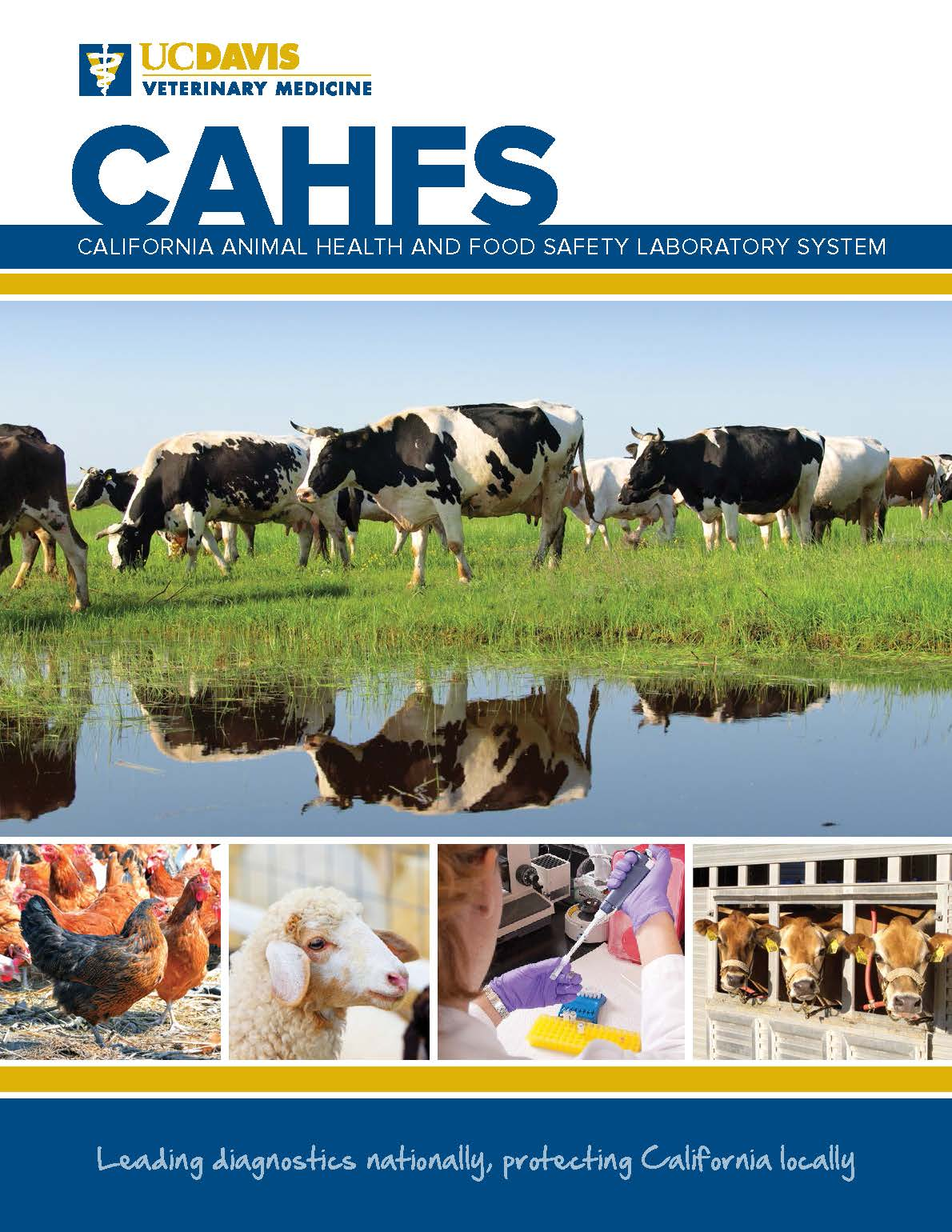 CAHFS Annual Report 2017