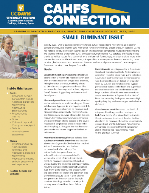 CAHFS Connection Newsletter May 2020 Small Ruminant