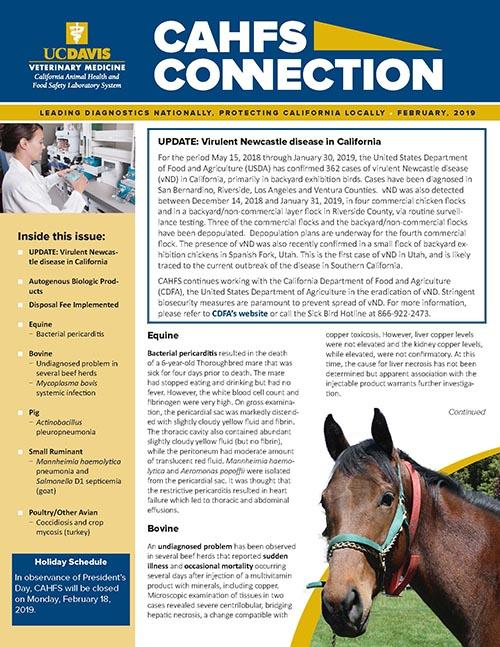 CAHFS Connection Newsletter February 2019