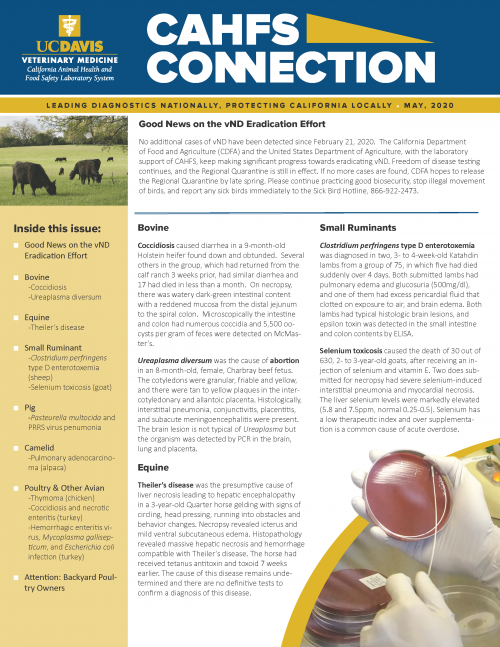 CAHFS Connection Newsletter May 2020