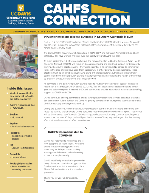 CAHFS Connection Newsletter June 2020